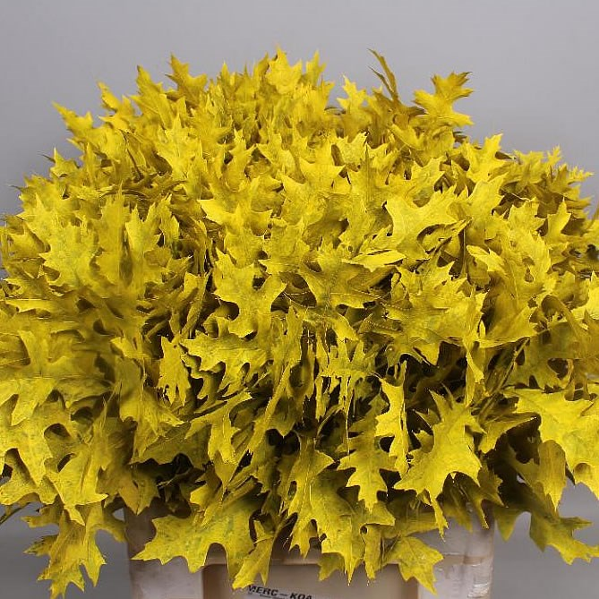 OAK LEAVES DYED YELLOW (SMALL)