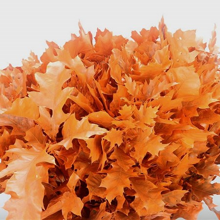 Oak Leaves Dyed Frosted Orange