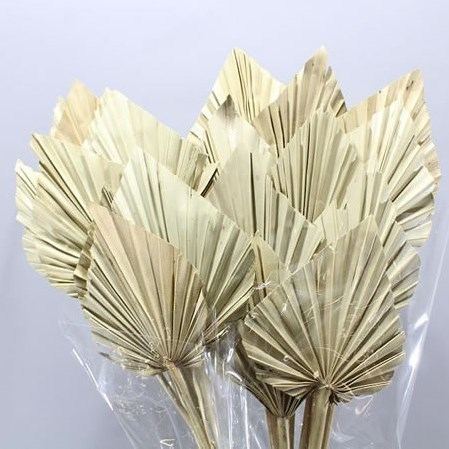 A1 PALM SPEARS NATURAL (DRIED)