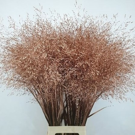 PANICUM GRASS DYED COPPER