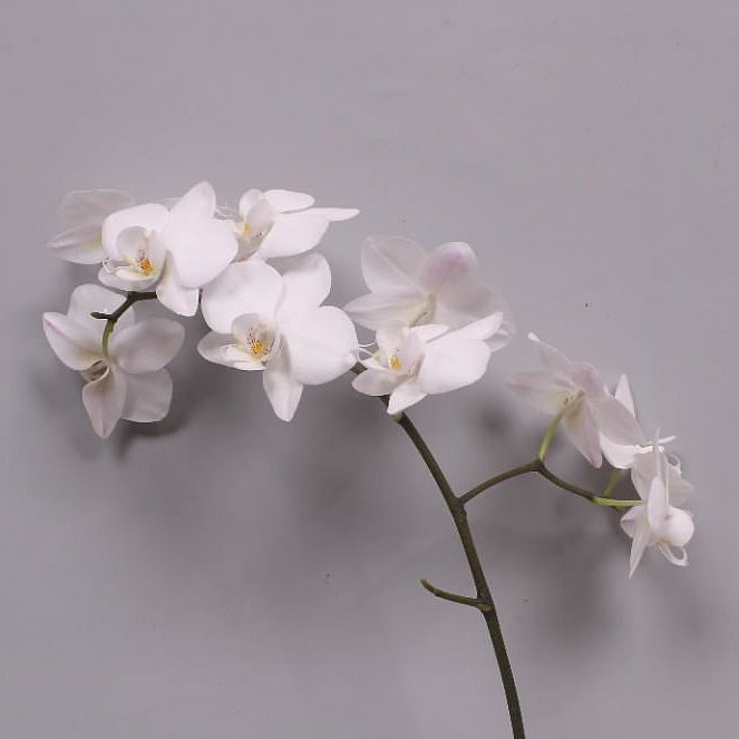PHALAENOPSIS ORCHID - VENICE (SMALL FLOWERS)