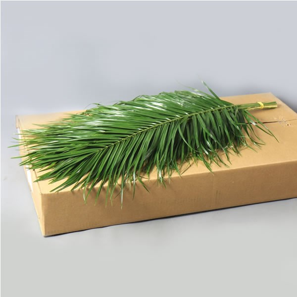 PHOENIX ROEBELENII PALM 100cm x1 bunch