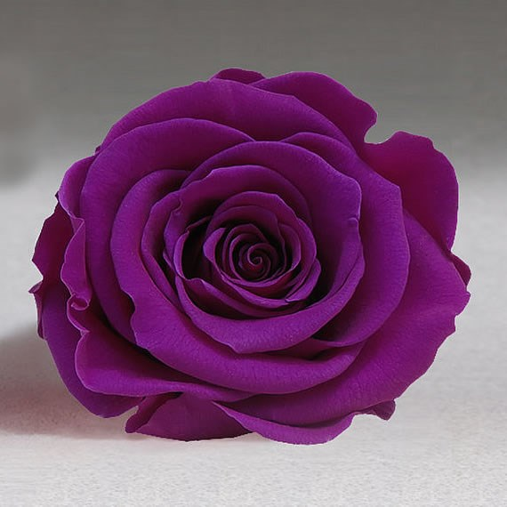 Preserved Roses - Purple (02)