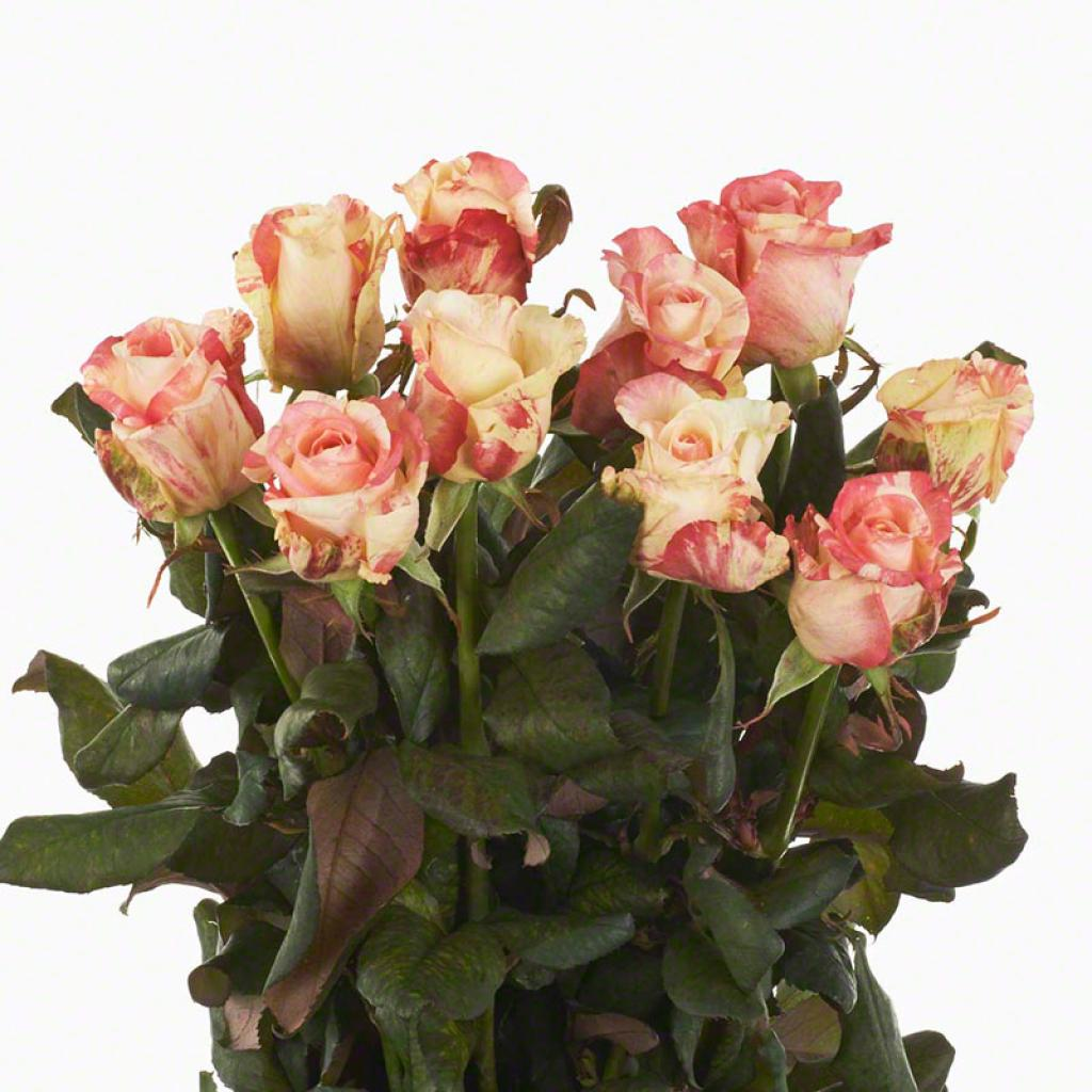 Buy wholesale cut roses online Wedding Flowers