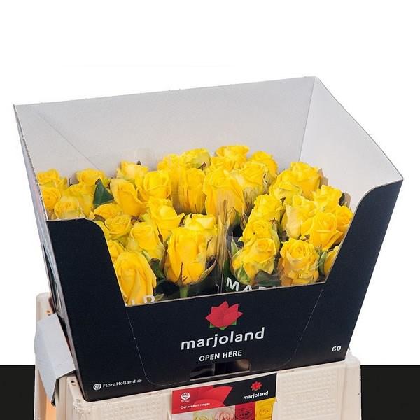 rose sunny sky 40cm wholesale flowers florist supplies uk. Black Bedroom Furniture Sets. Home Design Ideas