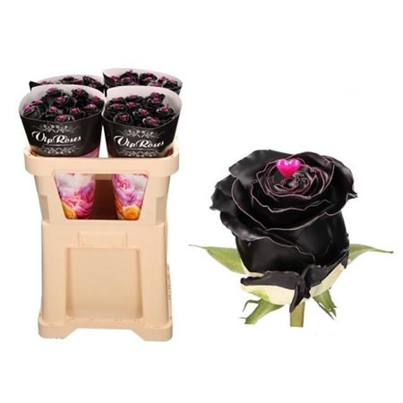 ROSE WAXED CHOCO BLACK BEAUTY