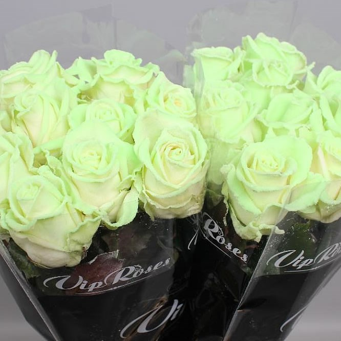 ROSES THAT GLOW IN THE DARK (99)