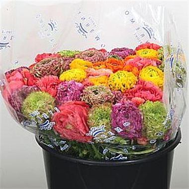 Ranunculus - Pon Pon Mix (cols may vary to image)