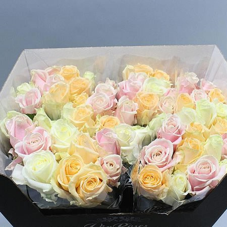 Rose Avalanche Pastel Mix (shades may vary)