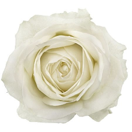Colombian Rose White (our choice)
