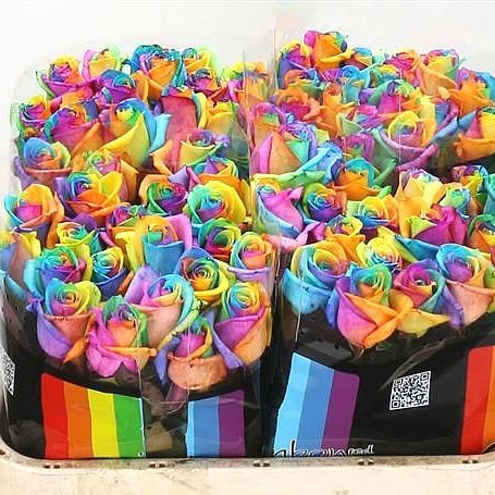 Wholesale dutch flowers wholesale floral supplier for Rainbow dyed roses