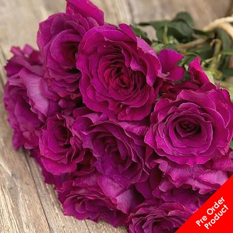 Rose Mamy Blue