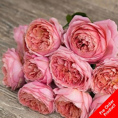 Rose Romantic Antike