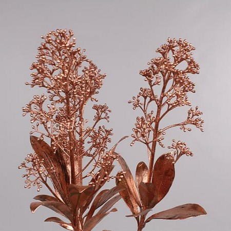 SKIMMIA DYED COPPER