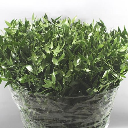 SOFT RUSCUS 60CM (SMALL LEAF)