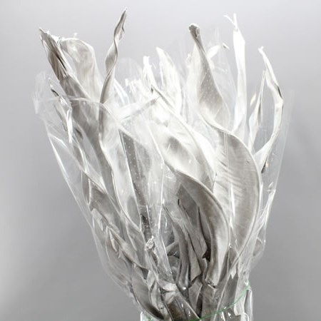 STRELITZIA LEAVES DRIED WHITE
