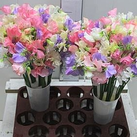 SWEET PEAS CANDY MIX