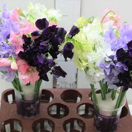 SWEET PEAS MIXED (COLS MAY VARY)