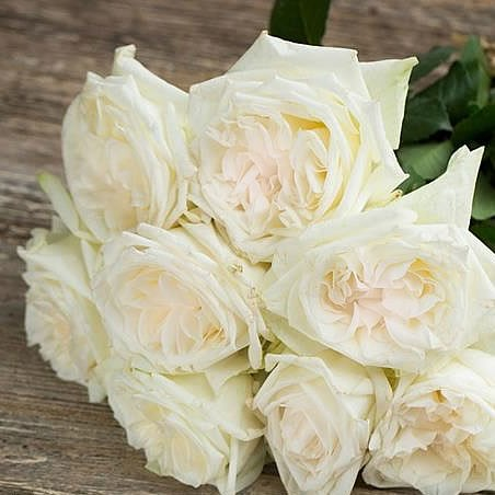 From Rijnsburg Auction Rose Garden White Ou0027hara (scented)
