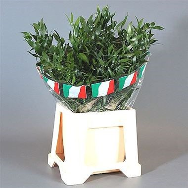 Soft Ruscus 70cm (Small Leaf)