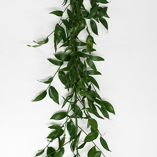 Single Soft Ruscus Garlands