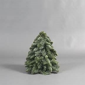 Weekly Special  - Spruce Pyramid