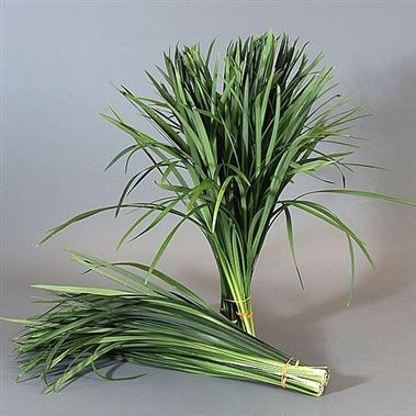 T-Grass Green (China Grass)
