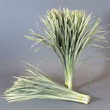 T-Grass Variegated (China Grass)