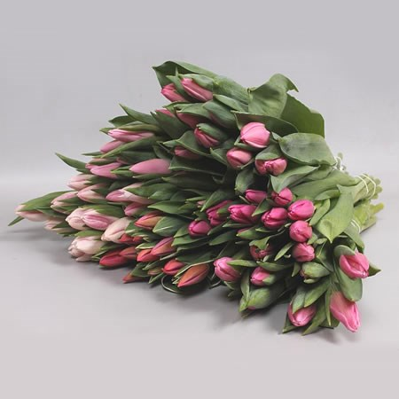 TULIPS PINK ASSORTED X150