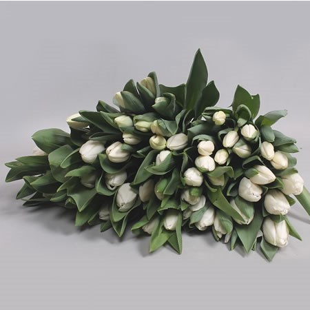 TULIPS WHITE ASSORTED X150