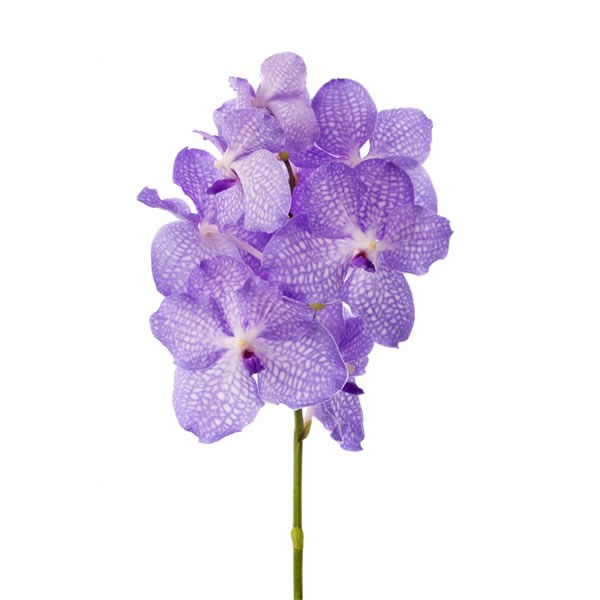 how to cut back orchid stems