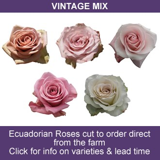 Vintage Rose Mix (Ecuador)
