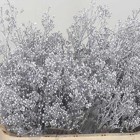 WAXFLOWER DYED SILVER