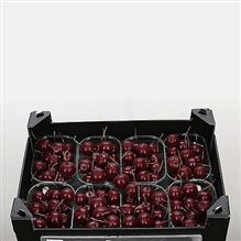 Waxed Apples Small - Wine Red
