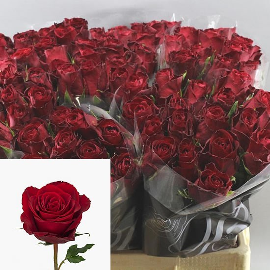 Weekly Special - Rose Madam Red