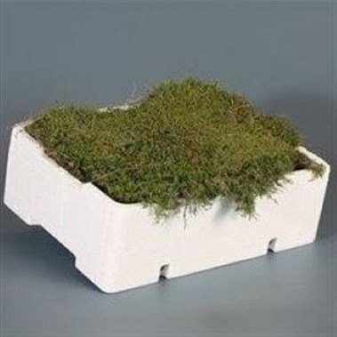 Weekly Special - CARPET / FLAT MOSS