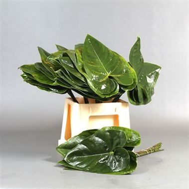 Anthurium Leaves Medium
