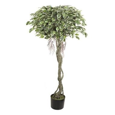 Artificial Ficus Tree - Variegated