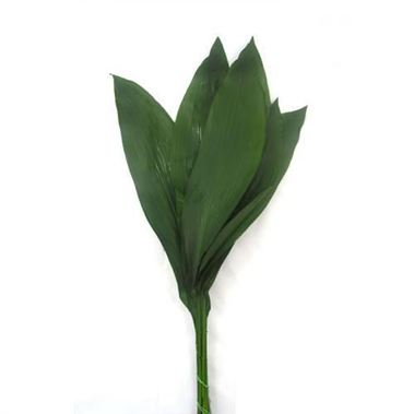 Aspidistra elatior Medium (approx. 100 stems)