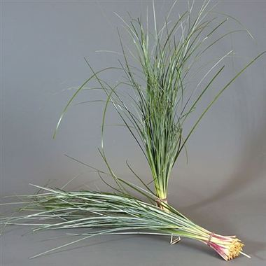 Beargrass Natural (TRI)