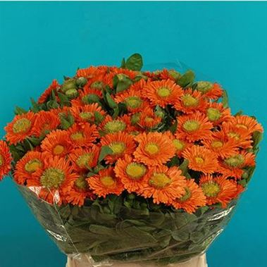 Calendula Orange 55cm
