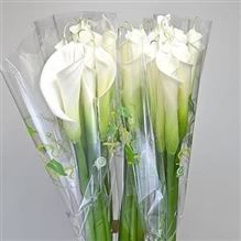 Calla Lily Highwood