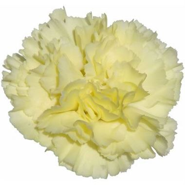 Carnation Buttermilk