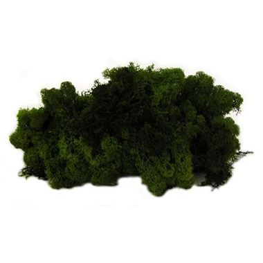 Reindeer Moss - Dark Green (Preserved)