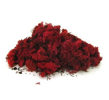 Finland Reindeer Moss - Red (Preserved)