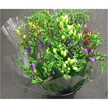Mixed Freesia - 10 stem bunches