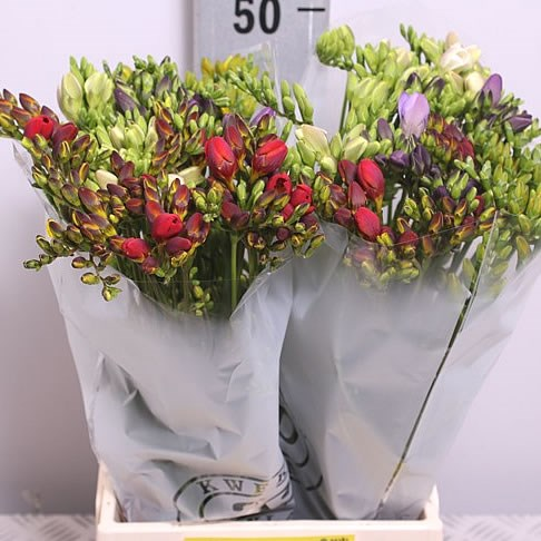 Weekly Special - FREESIA MIX