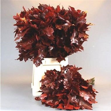Weekly Special - Oak Leaves Dyed Red