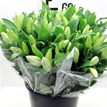 White Lilies - 3 stem bunches