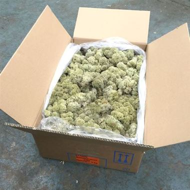 Reindeer Moss 3Kg - Natural (Preserved)